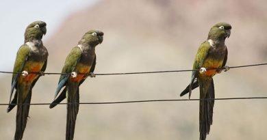 Parrots react to eclipse